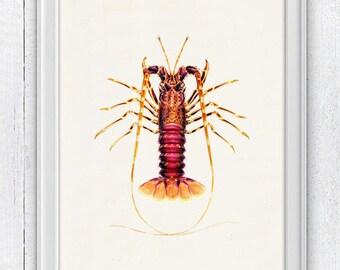 Lobster sea life print-Wall decor poster  ,  Sale buy 4 get 5- Marine  sea life illustration A4 print SAS021