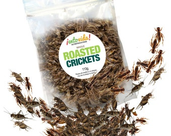 Edible Insects   Whole Roasted Crickets