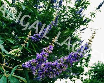 Flowers, Nature Print, Photography Print, Nature Art, Floral Print, Flower Art, Wall Art, Wall Decor, Vertical Art Print, 4 x 6 Print