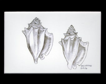 Pair of Prints: Shell Drawings