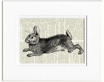 Rabbit print IV