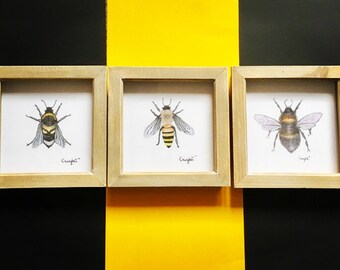 """Framed Bee XL Print Wall Art Trio collection  - 6""""x6"""" insect art rustic wall art, bumblebee prints"""