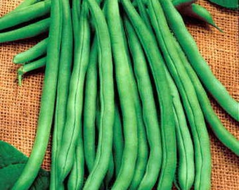 Blue Lake Bean Seeds, Wax beans,Stringless Garden Beans, Garden Bean Seeds, Non-GMO Vegetable seeds, Bush Beans, Pole Beans, Vegetable Seeds
