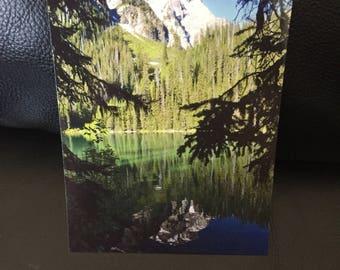 View through the trees Postcard
