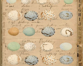 INSTANT DOWNLOAD DIGITAL Collage Sheet Bird Eggs