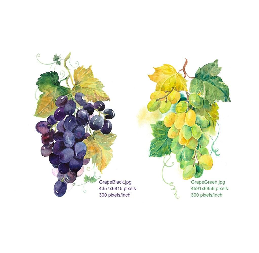 Clipart Watercolour Grapes Grapes Green Grapes Black