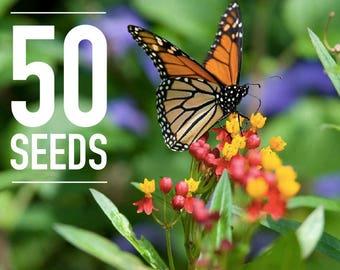 50 Seeds - Asclepias curassavica: Tropical milkweed, Mexican milkweed, Scarlet milkweed, Bloodflower - Monarch Butterfly Host Plant