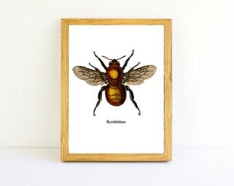 Bumblebee Print