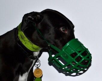 Greyhound kennel Muzzle