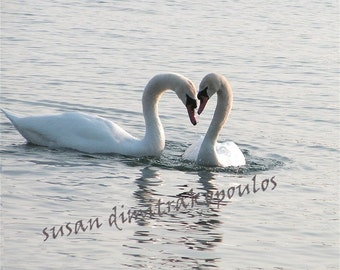 Swan Hearts, fine art photograph, wall art, home decor, nature photo, gift 20, home decor, birds lovers gift, wedding anniversary gift