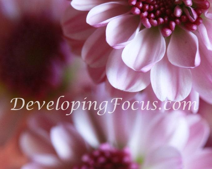 Dahlia Photography Card or Print, Purple Flower Photography Art, Soft Purple Macro Flower Photography Art Print, Purple Dahlia Flower Photo