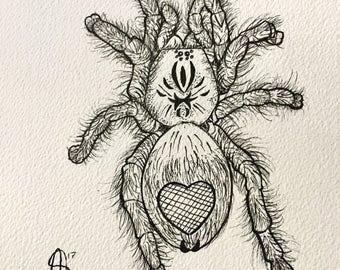 Avicularia Metallica **Original illustration**