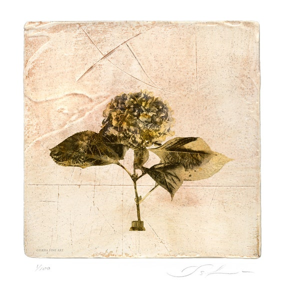 Hydrangea, botanical print, mother's day, flower print, affordable art, free shipping, wall decor, limited edition, miniature, victorian
