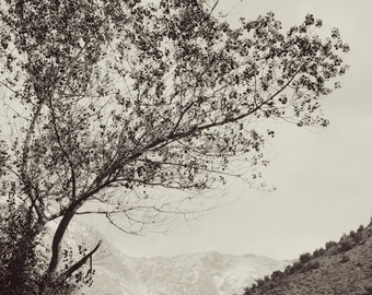 Mountains Landscape, Photography, Tree, Black and White, Home Decor, Large Wall Art, Travel, Morocco, Elegant Wall Art, Print, Nature, Zen
