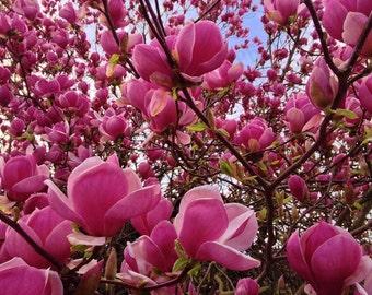 FLOWER photo, digital download photography, Digital photo, home decor, wedding gift, wall art, MAGNOLIA flower, fine art gift, FLOWER Art