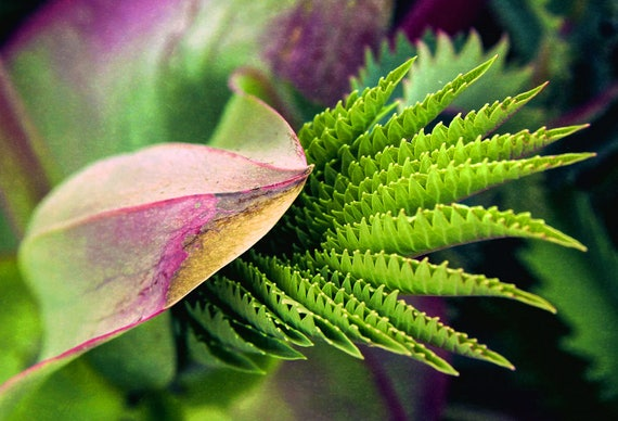 """Metal Art Print """"Fan"""", Plant Photography Printed on a Brushed Aluminum Box, 24x16x1, Special Order Only"""