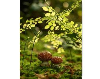 Amanita Mushroom Photograph print...Affordable Home Photography Prints Nature Photography Decor Nature Lover Woodland Scene Fungi