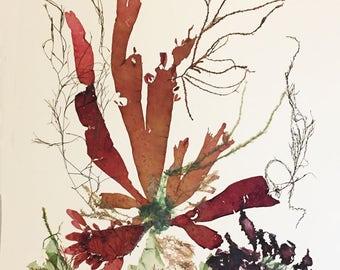 Art d'algues, algues pressé, pressage algues collage, victorien botanique algue œuvres d'art, chalet de plage, décor nautique, 16 x 20