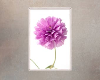 Printable Flower Wall Art, Purple Ranunculus Photography, Flower Poster, Large Flower Art,  Bedroom Wall Decor