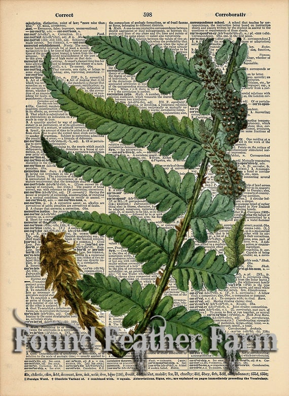 "Vintage Antique Dictionary Page with Antique Print ""Fern Leaf Two"""