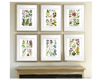 Wild Flowers Botanical Prints set of 6  Botanical Prints English wild flowers pastel room above mantel wall art antique botanical art