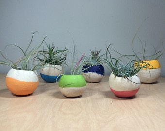 Air Plant Pod - 2 pack - brights