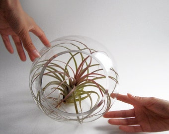 Giant Air Plant in the Bubble
