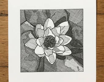 Waterlily - pen and ink illustration