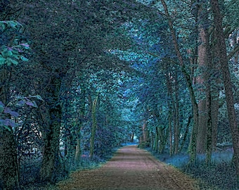 Nature Art Print, Fantasy Forest, Landscape Photography, Home Decor, Wall Art, Enchanted Forest, Forest Road,Teal,Blue, Green, Trees, Forest