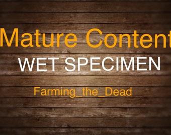 Midnight Black Rabbit-Wet Specimen