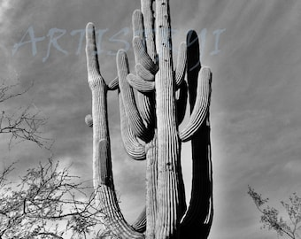 Mighty Saguaro  Print 10x13 Landscape Picture Artistryi Photography