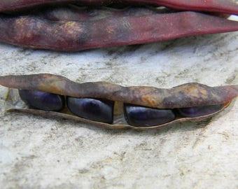 Blue Shackamaxon Pole Bean Seeds QTY. 20 {Very Rare Bean}