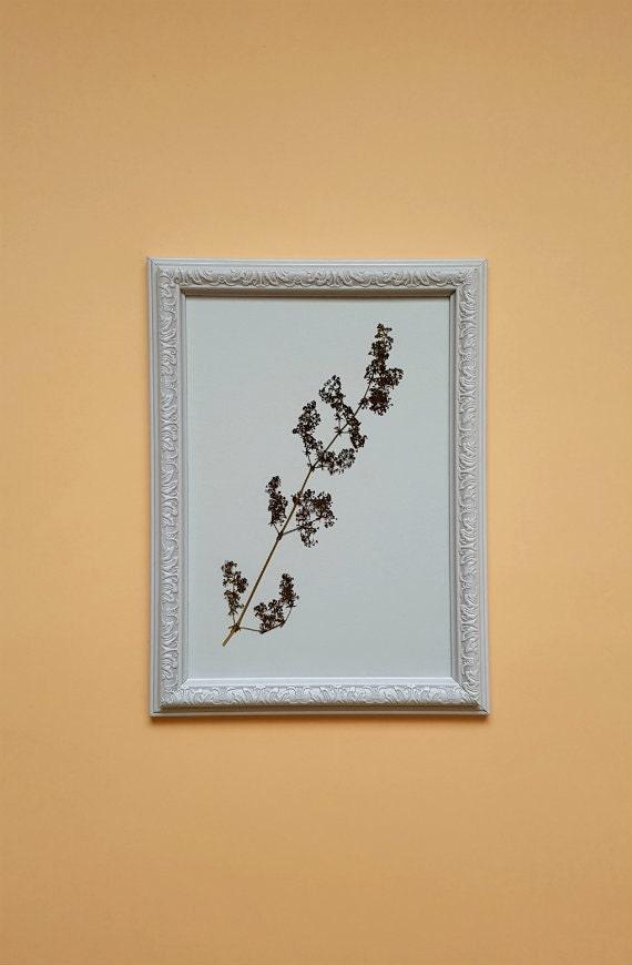 Flor arte botánico enmarcado flores prensadas secas plantas