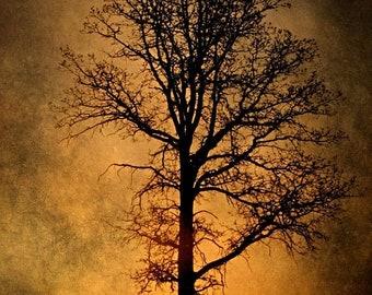25% Memorial Day Sale Tree Photograph, sunrise photo, home decor, Fine Art Photograph
