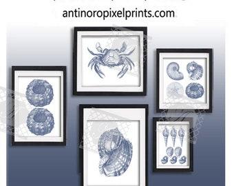 Sea Shells Blue Print Beach House Prints Wall Art Modern Inspired -Set of (5) Prints (UNFRAMED) #592712264