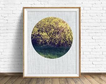 "nature photography, large art, large wall art, printable art, instant download printable art, nature prints, rustic wall art, art -""Willows"""