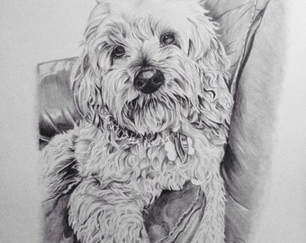Pet portrait drawing from photograph