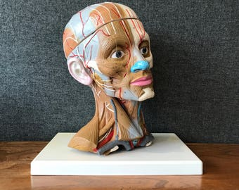 Where's your head at? Anatomical head.