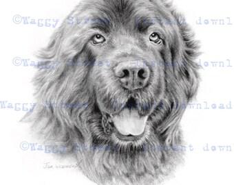Newfoundland printable wall art. Pencil drawing Instant download Dog clipart Newfoundland clipart Newfie art dog clip art printable art.