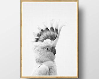 Galah  Print,  Australian Bird Print, Australian Bird Wall Art,  Australian Animal Print,  Cockatoo Print, Nursery Printable, Cockatoo