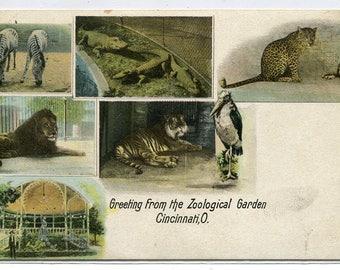 Greetings From Zoological Garden Zoo Cincinnati Ohio 1907c postcard