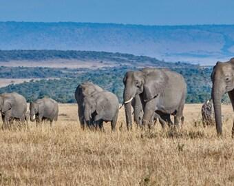 Elephant Family on The Mara