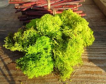 Moss/ reindeer Moss/ preserved moss/ lichen/ moss to creative moss terrarium/ moss decoration/ moss  Dollhouse/ moss stable