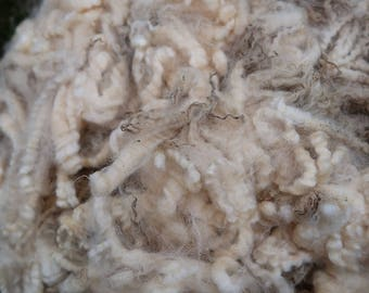 Raw White Romney Ram Lamb Fleece- Halsey