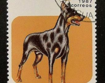 Dobermann Dog -Handmade Framed Postage Stamp Art 13717