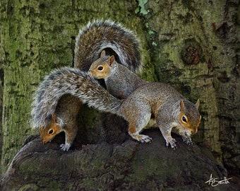 Squirrel Print, Animal Print, Woodland Art, Home Deco, Nature Print, Squirrel gift, Nursery Print