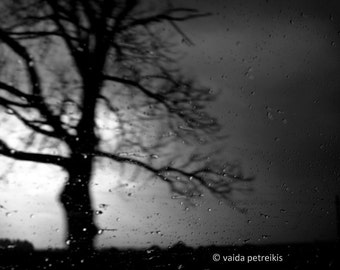 Into the Night - 4x6 Fine Art Photograph - Mystical nature image dark night with rain drops in black and white - signed limited edition