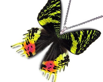 Real Butterfly Wing Necklace / Pendant (WHOLE Urania Ripheus Sunset Moth - W002)