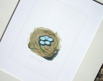 Bird Nest with Pale Blue Eggs Naturalist Drawing Archival Quality Print