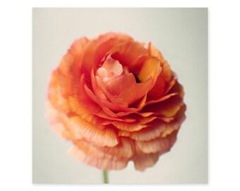 Ranunculus Photography Art Print - Orange Flower Wall Decor - Framed Flower Wall Art - Square Canvas Art - Gifts for Flower Lovers